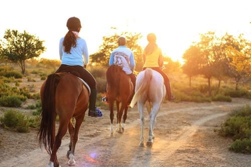 horsebackridingcu