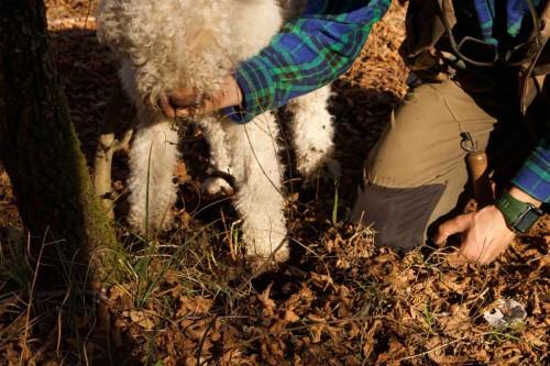 italy-truffle-hunting